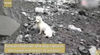Chú chó đợi chủ trên đống đổ nát ở Tứ Xuyên
