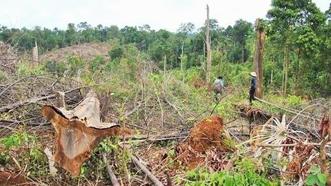 Chặt trụi rừng vì tin đồn đường cao tốc chạy qua