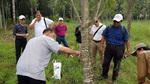 'Độc cô cầu bại' của làng cấy trầm Việt Nam