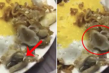 Du khách rùng mình thấy giòi ngoe nguẩy trong đĩa thức ăn