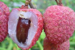 Những loại trái cây dù rất ngon nhưng nếu ăn phải bộ phận này của nó sẽ cực kì nguy hại