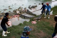 Bên trong trang trại cá sấu lớn nhất thế giới