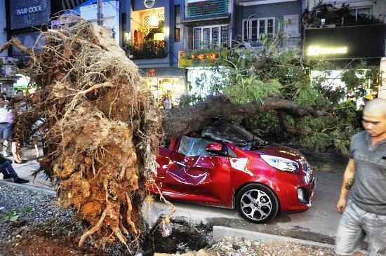 Không mưa giông, cây xanh vẫn bật gốc đè nát ôtô ở Sài Gòn