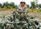 Vựa trái cây miền Tây liêu xiêu vì trái cây Thái Lan