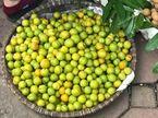 Mới đầu mùa, dân Việt ăn hơn 7.000 tấn mận Trung Quốc