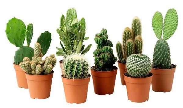 Loại bỏ bức xạ điện tử trong nhà nhờ 8 loại cây 'kỳ diệu' này