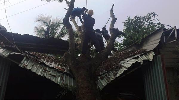 Cha ôm hai con nhỏ lao khỏi căn nhà bị cây xà cừ đè sập