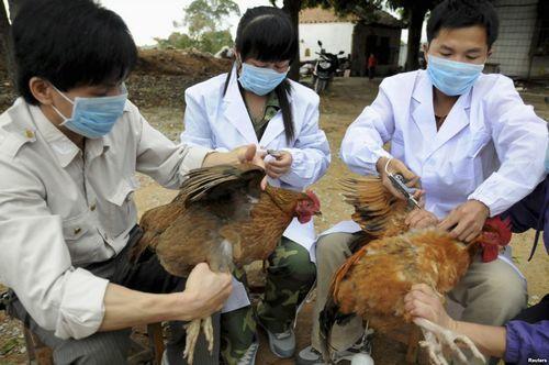 Hướng dẫn phân biệt cúm A H1N1 và cúm A H5N1