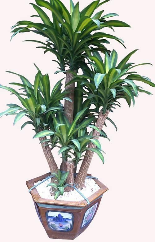 Muốn tài lộc dồi dào, trồng ngay những loại cây phát lộc vừa đẹp vừa sang này