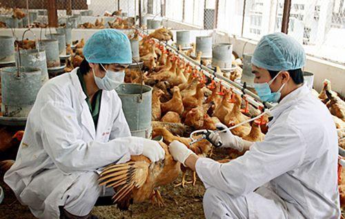 nguyên nhân bệnh cúm AH5N1,Điều trị bênh cúm AH5N1,Cúm a h5n1