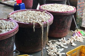 Xuất đỉa sang Trung Quốc 600 ngàn/kg; bán tía tô đi Nhật 700 đồng/lá