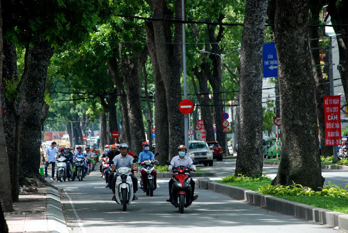 Người Sài Gòn tiếc ngẩn ngơ hàng cổ thụ trăm tuổi sắp bị đốn hạ