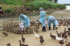 Điều trị Bệnh Cúm A H5N1