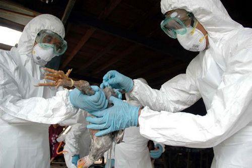 Các biện pháp ngăn chặn dịch cúm A H5N1 lan truyền trên diện rộng