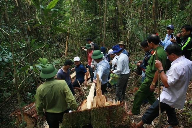 Bàn giao 20 đối tượng phá rừng pơ mu cho quân đội xử lý