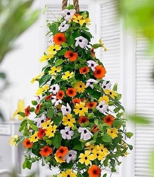 ban công, trang trí ban công, trồng hoa ban công, hoa ti gôn, hoa dạ yến thảo