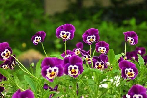 12 loài hoa trồng ban công này sẽ khiến nhà bạn 'nổi nhất phố'