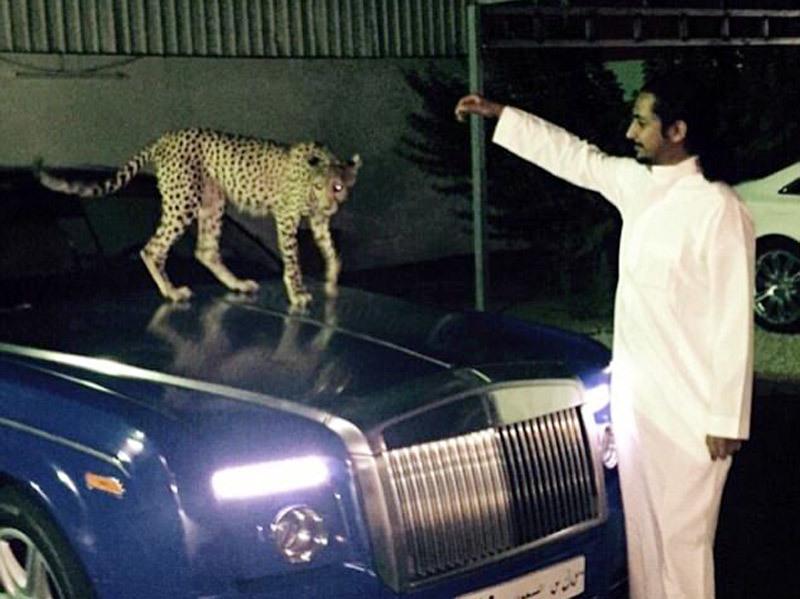 Cậu ấm cô chiêu Ả rập đọ độ giàu bằng thú cưng 'hổ, báo'