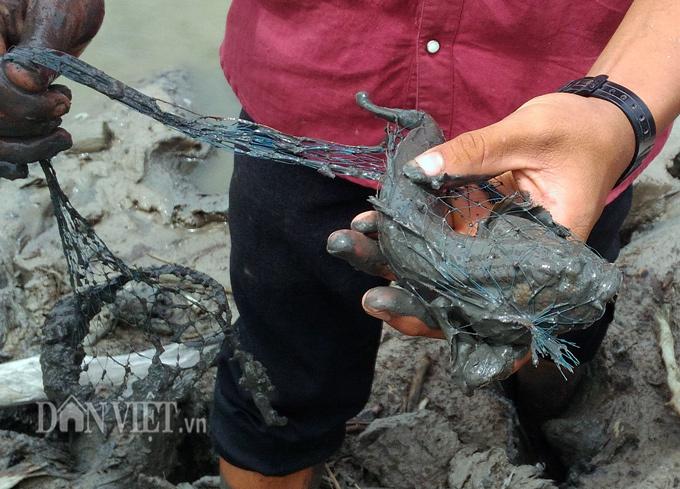 Đặc sản cá kỳ lạ nhất hành tinh: Vừa biết lặn vừa biết leo cây ở Cà Mau