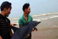 Giải cứu cá heo mắc cạn ở bờ biển Nghệ An