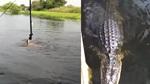 Cảnh trẻ em nhảy tắm dưới hồ cá sấu gây kinh hãi