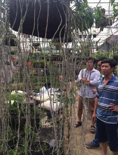 Tỷ phú sở hữu vườn lan rừng quý hiếm bậc nhất đất Việt - ảnh 3