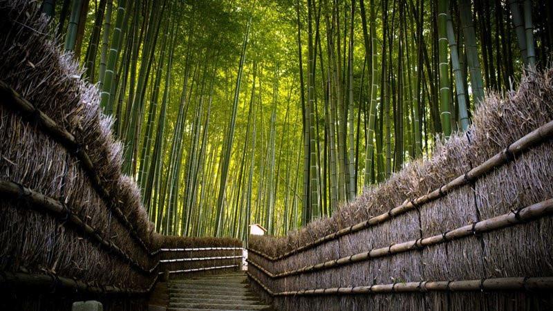 Rừng tre, Du lịch Nhật Bản