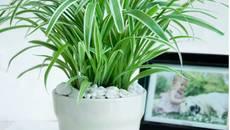 Bạn không cần sợ không khí ô nhiễm khi trồng 15 loại cây này trong nhà