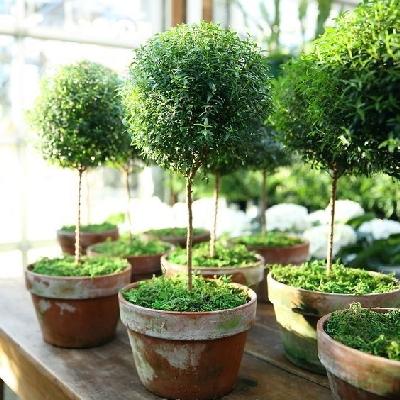 cây cảnh đẹp, cây cảnh để bàn, ô nhiễm không khí