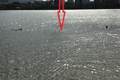 Cảnh sát cơ động nhảy xuống sông Hàn cứu cô gái tự vẫn
