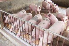 Giá thịt lợn lên 45 ngàn/kg: Tăng cao nữa là có vấn đề