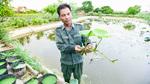 Kiếm trăm triệu mỗi tháng nhờ đầm sen quý 10 loại hoa