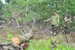 Công an truy tìm kẻ đầu độc 242 cây gỗ trong rừng phòng hộ
