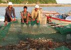 Kiến nghị khẩn cấp Chính phủ cho dừng nhận chìm bùn thải