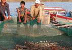 Kiến nghị Chính phủ cho dừng nhận chìm bùn thải