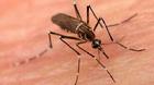 Khi sốt xuất huyết, không được dùng thuốc nào?