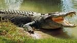 Cá sấu trả xác nạn nhân sau khi pháp sư 'triệu hồi'