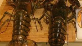Bàn nhậu đại gia: Tôm hùm Canada 7kg, cá trắm đen Yên Bái 45kg