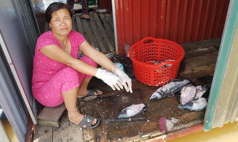 Vớt cá 'tiến vua' về nuôi lợn