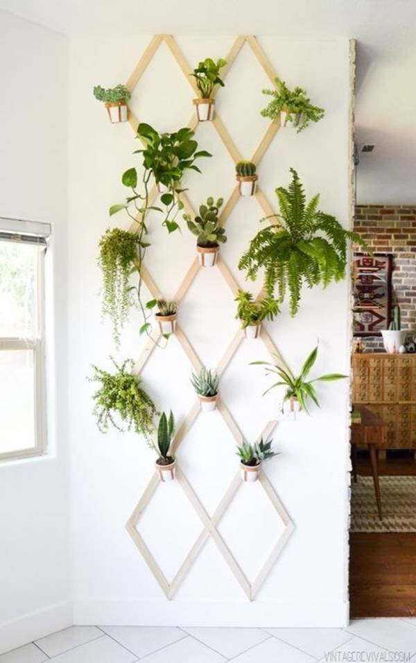 Muôn kiểu trồng cây 'hay ho' không cần vườn cho nhà chật
