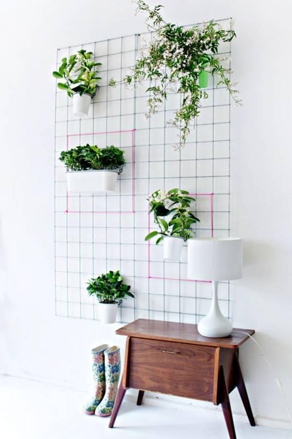 trồng cây, những kiểu trồng cây độc đáo