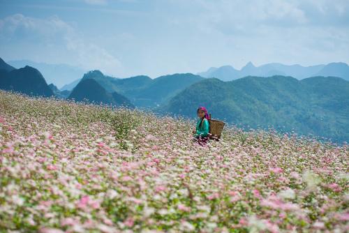 Cơ hội mua tour giá rẻ siêu sốc từ Saigontourist