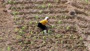 Triều Tiên đối mặt với nạn đói