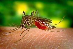 Bệnh sốt rét và cách phòng chống bệnh