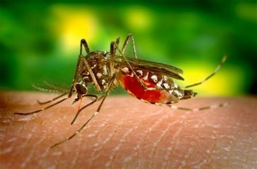 Làm thế nào để phòng chống bệnh sốt rét