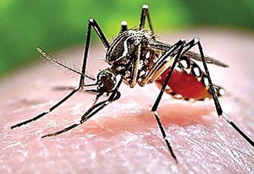 Sốt rét,Điều trị bệnh sốt rét,bệnh truyền nhiễm,Bệnh sốt rét