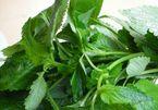 Điều trị bệnh thủy đậu bằng các loại lá cây hiệu quả