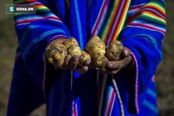 Gửi những người hay thù ghét, oán hận: Bài học thấm thía từ những củ khoai tây thối
