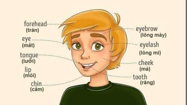 Từ vựng tiếng Anh về các bộ phận trên cơ thể
