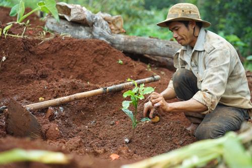 Làn sóng bỏ 'đất vàng' cà phê đi xuất khẩu lao động